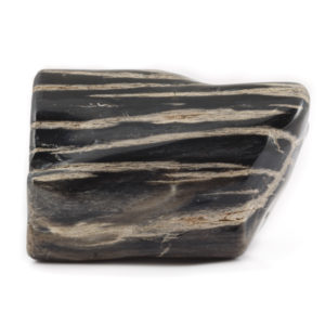 Petrified Wood Meaning