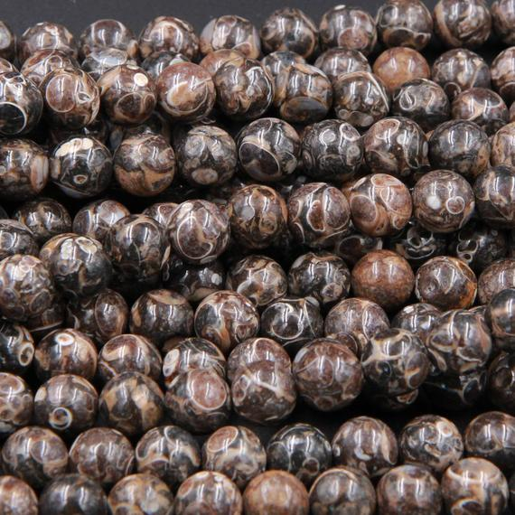 """Natural Turritella Agate Fossil Round Beads 4mm 6mm  8mm 10mm Round Beads Genuine Real Dark Brown Black Fossil From Wyoming 15.5"""" Strand"""