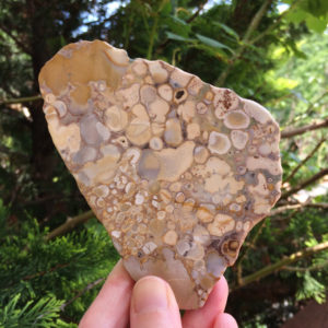 "Shop Agate Shapes! AUSTRALIAN AGATE Slab 5.1"" – Flat Stone Slice – Both Sides Polished – Natural Crystal – Healing Stone – Collectible – From Australia – 137g 